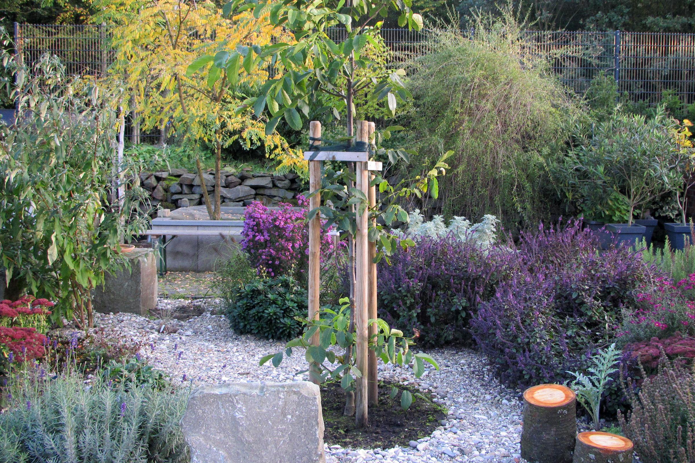 Steingarten mit Walnussbaum