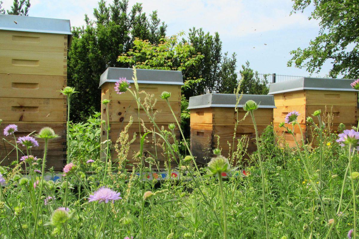 Unsere Bienenstöcke im Bienenhort Suderwich