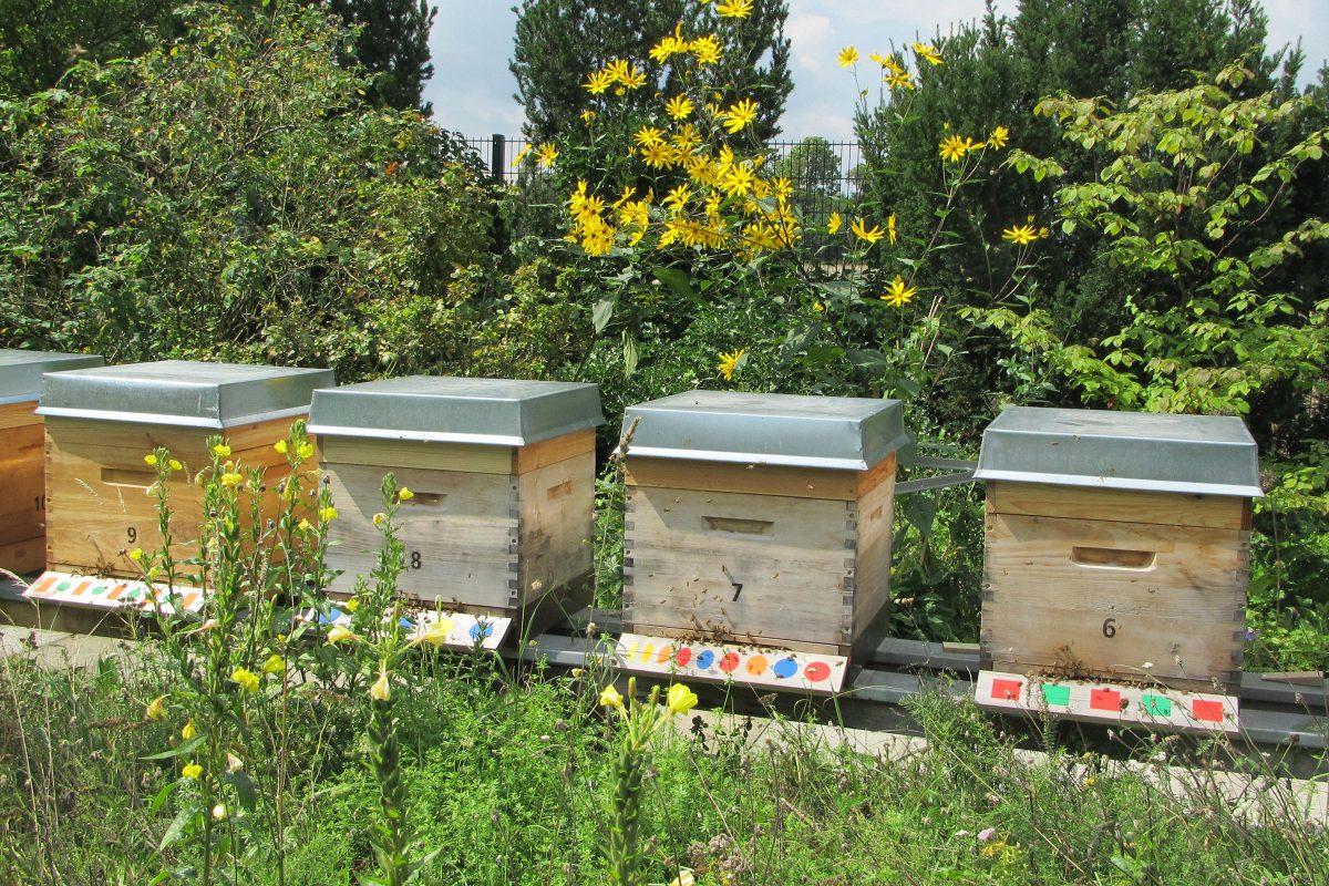 Unsere Bienenstöcke der Imkerei Bienenhort Suderwich