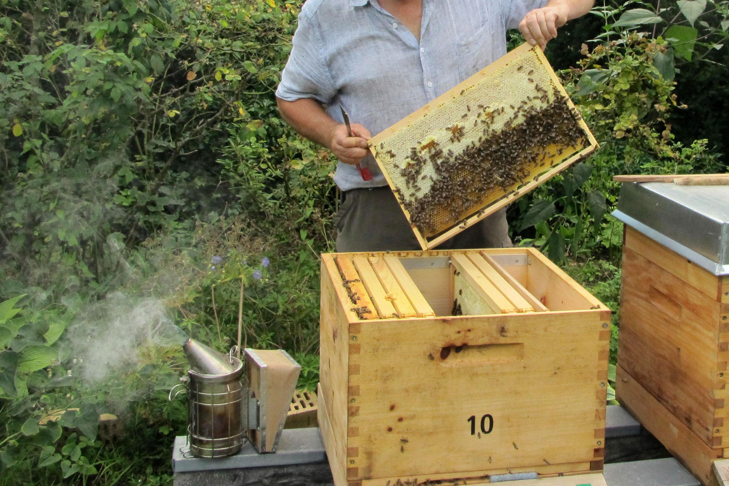 Arbeiten am Bienenstock der Imkerei Bienenhort Suderwich