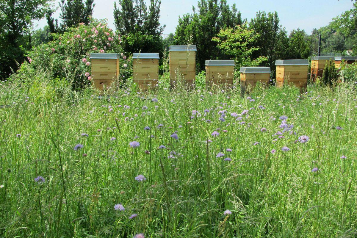 Imkerei Bienenhort Suderwich Recklinghausen im Sommer
