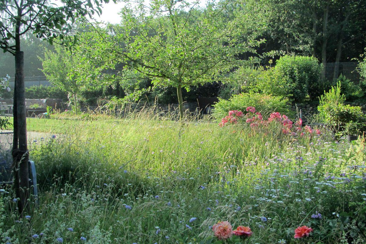 Blumenwiese und Obstgarten