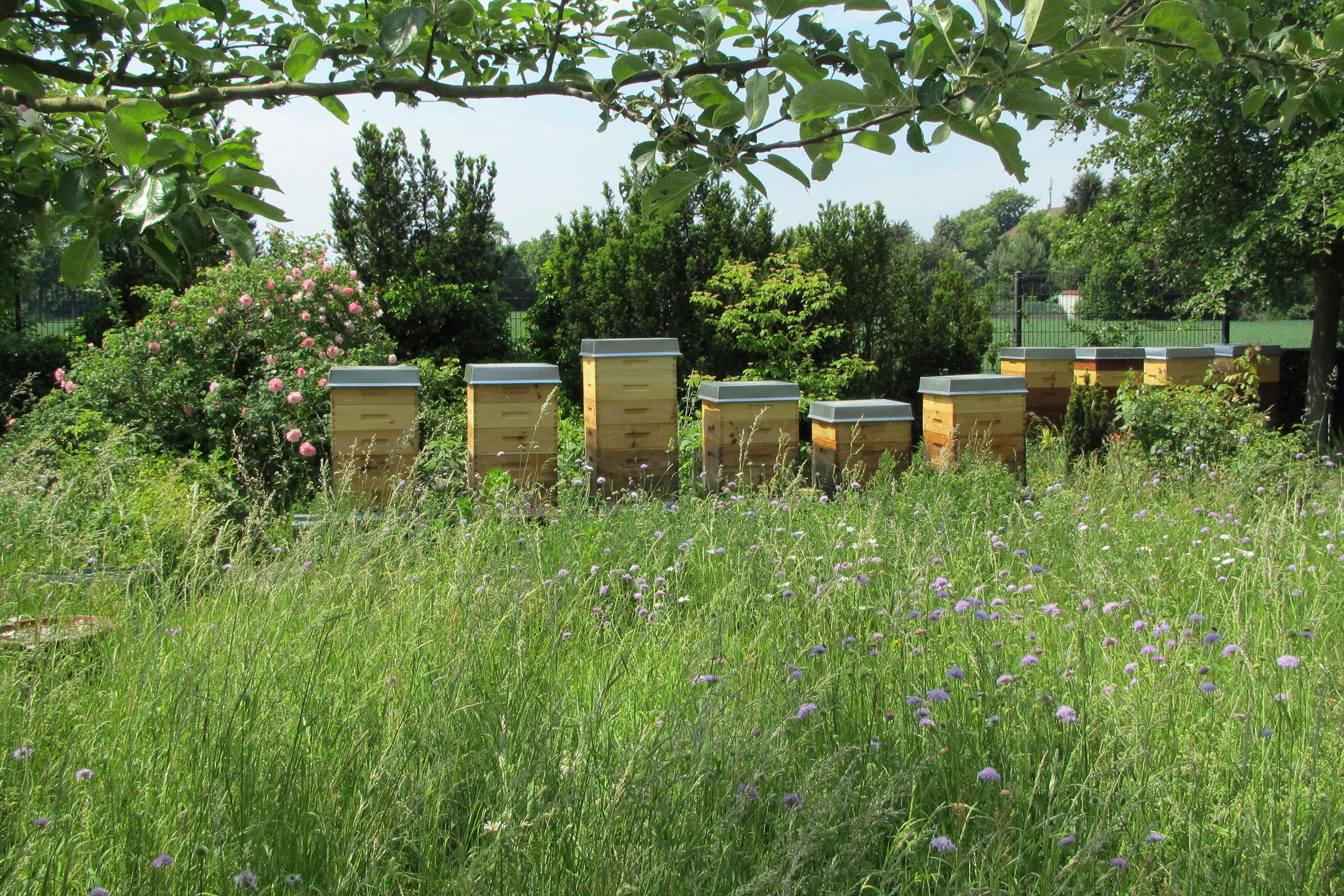 Blumenwiese mit Bienenstöcken