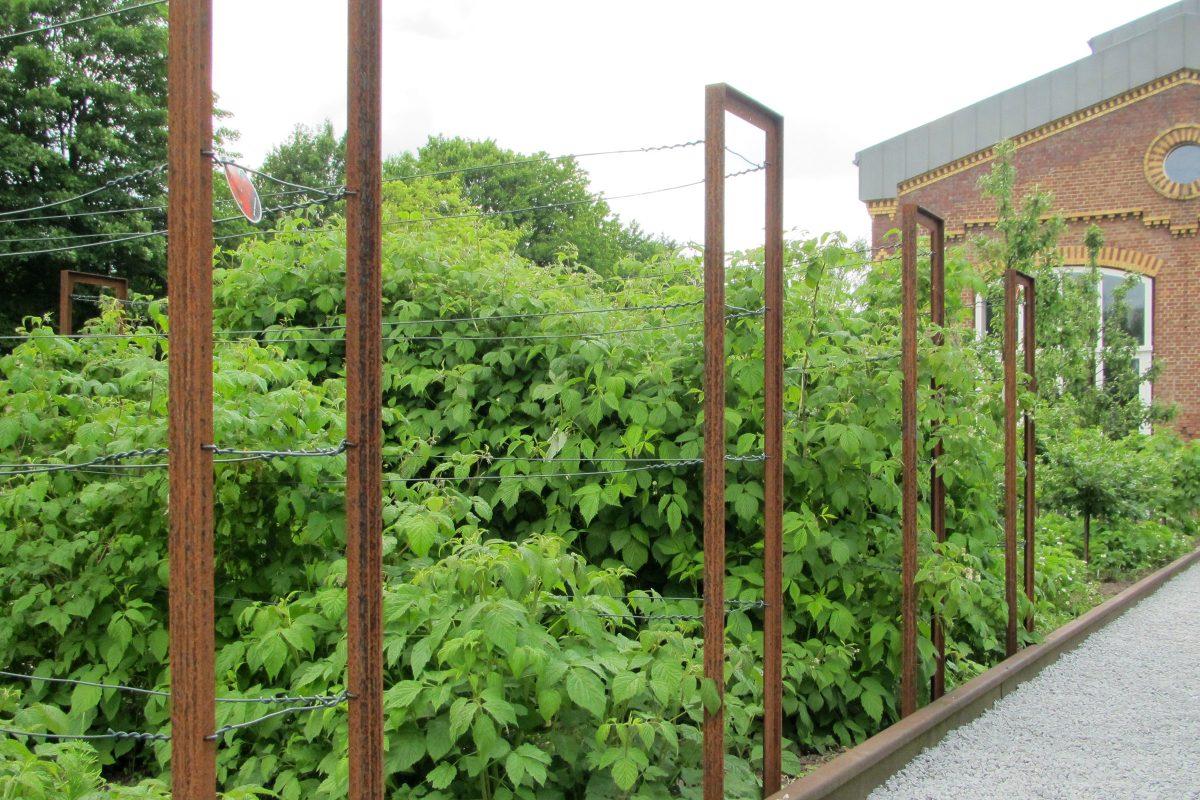 Obstgarten mit Himbeersträuchern