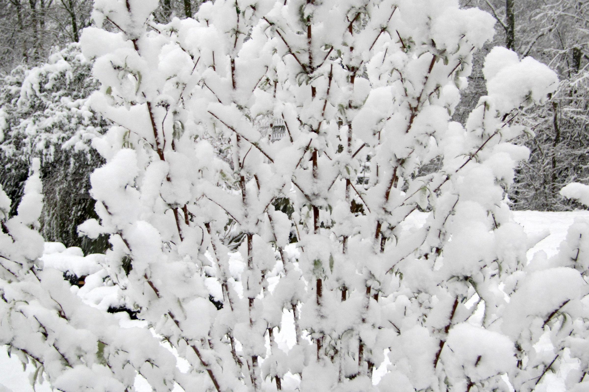 Sträucher im Winter