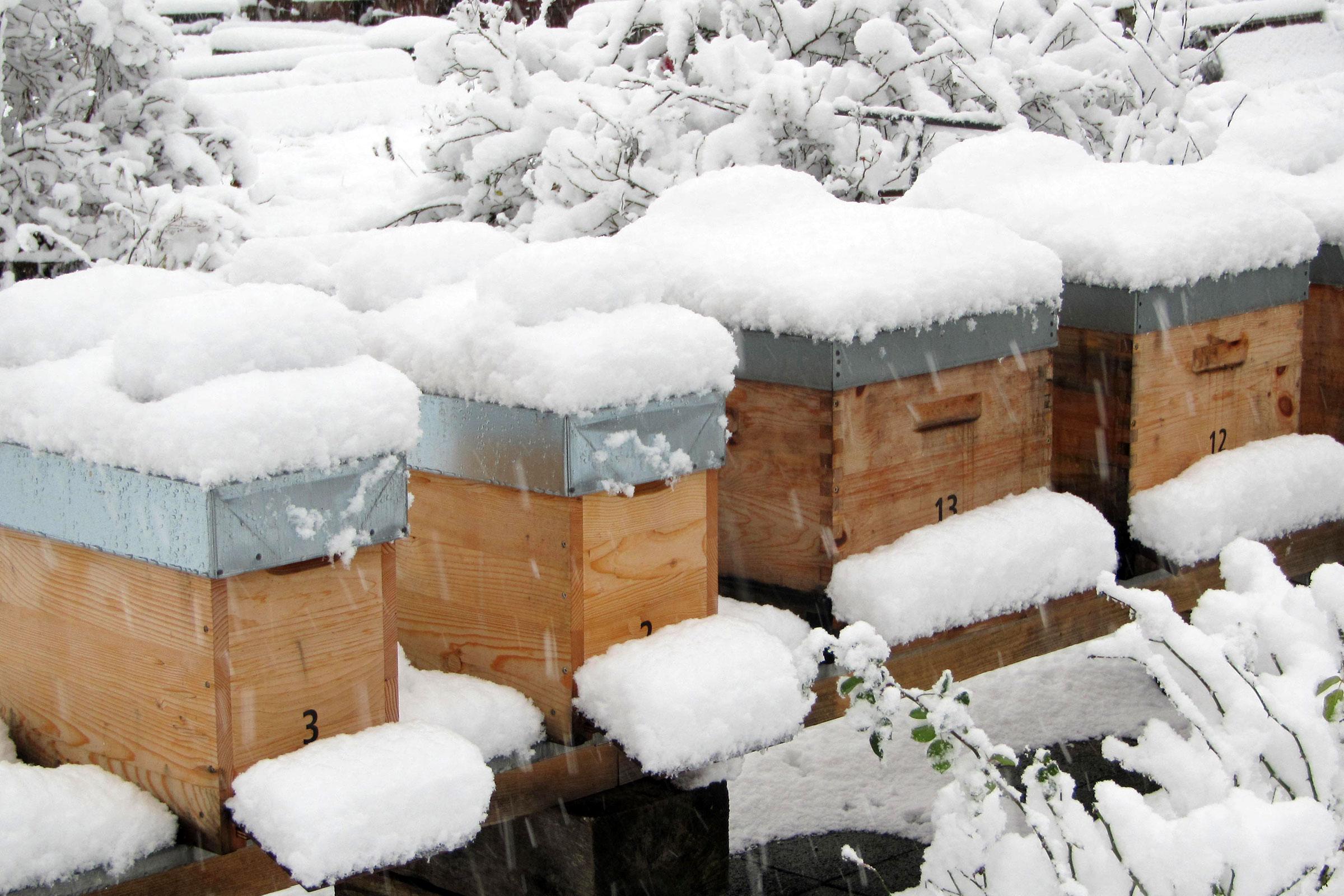 Bienenstöcke der Imkerei Bienenhort Suderwich im Winter