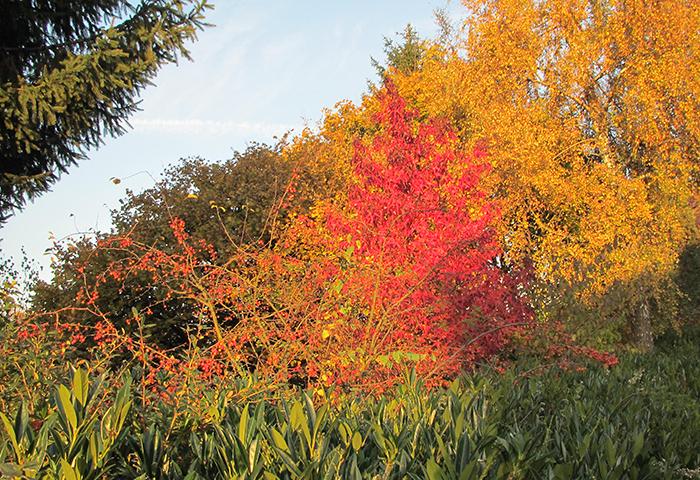 Tag der Offenen Gartenpforte Recklinghausen Herbst