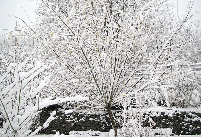 Tag der Offenen Gartenpforte Recklinghausen Winter
